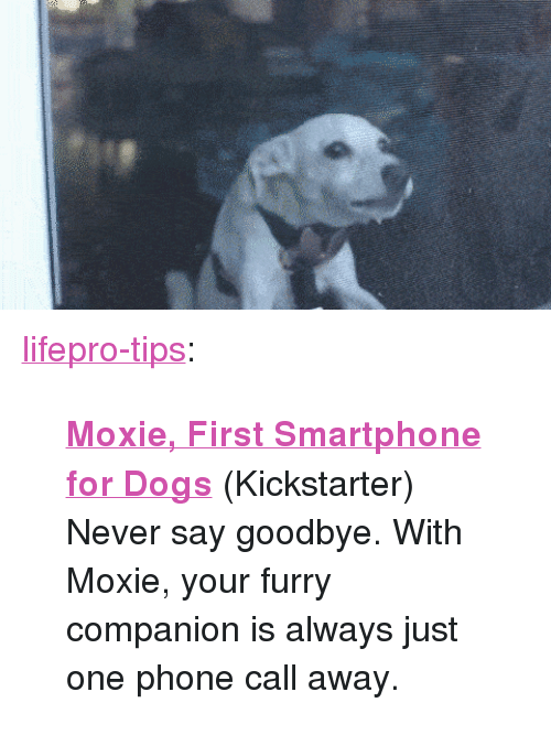 """Kickstarter: <p><a href=""""http://lifepro-tips.tumblr.com/post/173330768517/moxie-first-smartphone-for-dogs-kickstarter"""" class=""""tumblr_blog"""">lifepro-tips</a>:</p><blockquote><p>  <b><a href=""""https://tinyurl.com/ydeuvjvp"""">Moxie, First Smartphone for Dogs</a></b> (Kickstarter)<br/> Never say goodbye. With Moxie, your furry companion is always just one phone call away.<br/></p></blockquote>"""