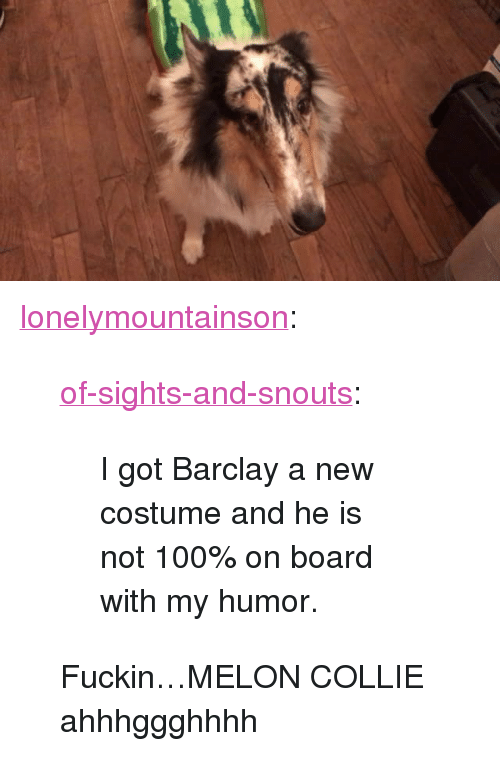 """collie: <p><a href=""""http://lonelymountainson.tumblr.com/post/166522212446/of-sights-and-snouts-i-got-barclay-a-new"""" class=""""tumblr_blog"""">lonelymountainson</a>:</p><blockquote> <p><a href=""""https://of-sights-and-snouts.tumblr.com/post/166451500136/i-got-barclay-a-new-costume-and-he-is-not-100-on"""" class=""""tumblr_blog"""">of-sights-and-snouts</a>:</p>  <blockquote><p>I got Barclay a new costume and he is not 100% on board with my humor.</p></blockquote>  <p>Fuckin…MELON COLLIE ahhhggghhhh</p> </blockquote>"""