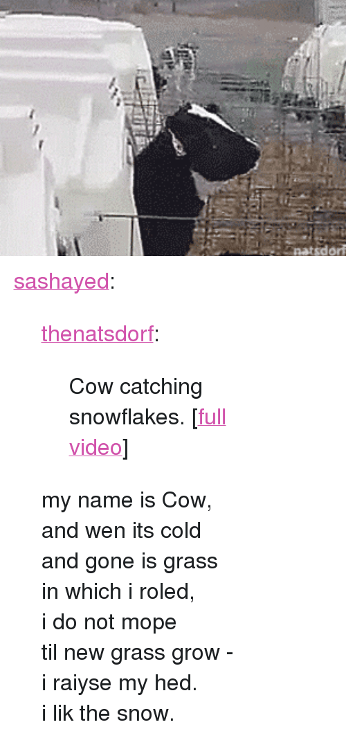 """Tumblr, Blog, and Http: <p><a href=""""http://sashayed.tumblr.com/post/155925205420/thenatsdorf-cow-catching-snowflakes-full"""" class=""""tumblr_blog"""">sashayed</a>:</p> <blockquote> <p><a href=""""http://natsdorf.com/post/155825571808/cow-catching-snowflakes-full-video"""" class=""""tumblr_blog"""">thenatsdorf</a>:</p> <blockquote><p>Cow catching snowflakes. [<a href=""""http://www.tastefullyoffensive.com/2017/01/cow-catches-snowflakes-on-her-tongue.html"""">full video</a>]</p></blockquote> <p>my name is Cow,<br/>and wen its cold<br/>and gone is grass<br/>in which i roled,<br/>i do not mope<br/>til new grass grow -</p> <p>i raiyse my hed.<br/>i lik the snow.</p> </blockquote>"""