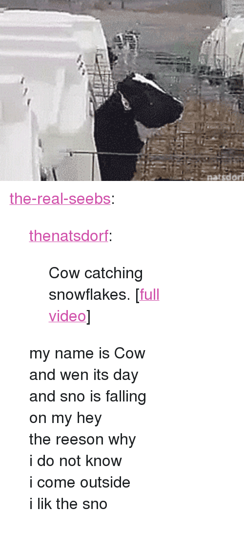 """Tumblr, Blog, and Http: <p><a href=""""https://the-real-seebs.tumblr.com/post/155853676068/thenatsdorf-cow-catching-snowflakes-full"""" class=""""tumblr_blog"""">the-real-seebs</a>:</p> <blockquote> <p><a href=""""http://natsdorf.com/post/155825571808/cow-catching-snowflakes-full-video"""" class=""""tumblr_blog"""">thenatsdorf</a>:</p>  <blockquote><p>Cow catching snowflakes. [<a href=""""http://www.tastefullyoffensive.com/2017/01/cow-catches-snowflakes-on-her-tongue.html"""">full video</a>]</p></blockquote>  <p>my name is Cow<br/> and wen its day<br/> and sno is falling<br/> on my hey<br/> the reeson why<br/> i do not know<br/> i come outside</p>  <p>i lik the sno</p> </blockquote>"""