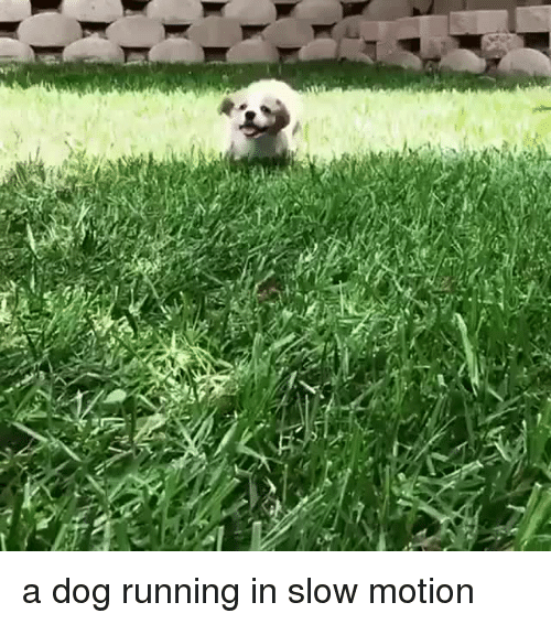 Slow Motion: <p>a dog running in slow motion<br/></p>