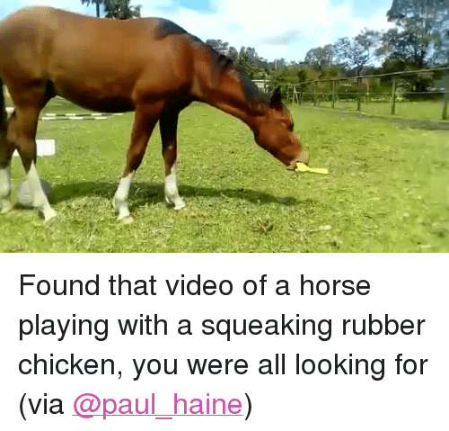 """rubber chicken: <p>Found that video of a horse playing with a squeaking rubber chicken, you were all looking for<br/></p><p>(via <a href=""""https://twitter.com/paul_haine/status/863415877831729152"""" target=""""_blank"""">@paul_haine</a>)</p>"""