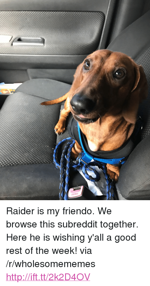 "Friendo: <p>Raider is my friendo. We browse this subreddit together. Here he is wishing y'all a good rest of the week! via /r/wholesomememes <a href=""http://ift.tt/2k2D4OV"">http://ift.tt/2k2D4OV</a></p>"