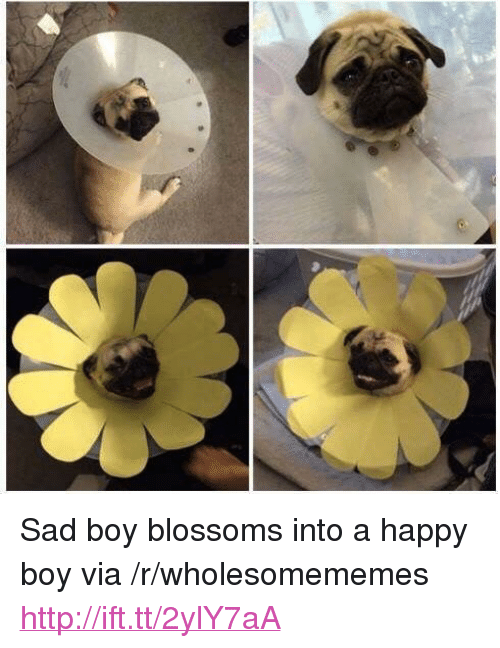 "sad boy: <p>Sad boy blossoms into a happy boy via /r/wholesomememes <a href=""http://ift.tt/2ylY7aA"">http://ift.tt/2ylY7aA</a></p>"
