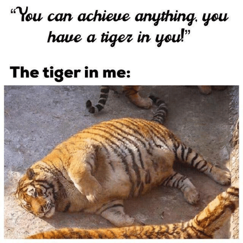 "Tiger, Can, and You: ·You can achieve anything, you  haue a tiqez in you!""  05  The tiger in me:"