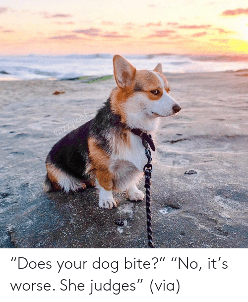 "Dog: ""Does your dog bite?"" ""No, it's worse. She judges"" (via)"