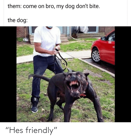 "hes: ""Hes friendly"""