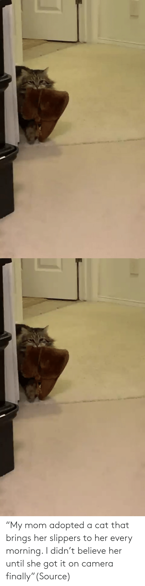 "believe: ""My mom adopted a cat that brings her slippers to her every morning. I didn't believe her until she got it on camera finally""(Source)"