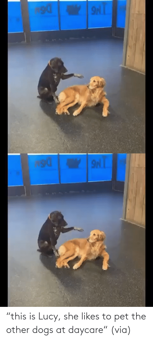 "pet: ""this is Lucy, she likes to pet the other dogs at daycare"" (via)"