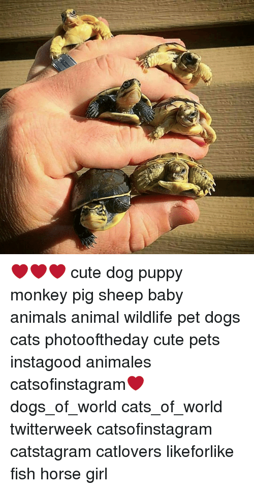Cute Dog Puppy Monkey Pig Sheep Baby Animals Animal Wildlife Pet Dogs Cats Photooftheday Cute Pets Instagood Animales Catsofinstagram Dogs Of World Cats Of World Twitterweek Catsofinstagram Catstagram Catlovers Likeforlike Fish Horse