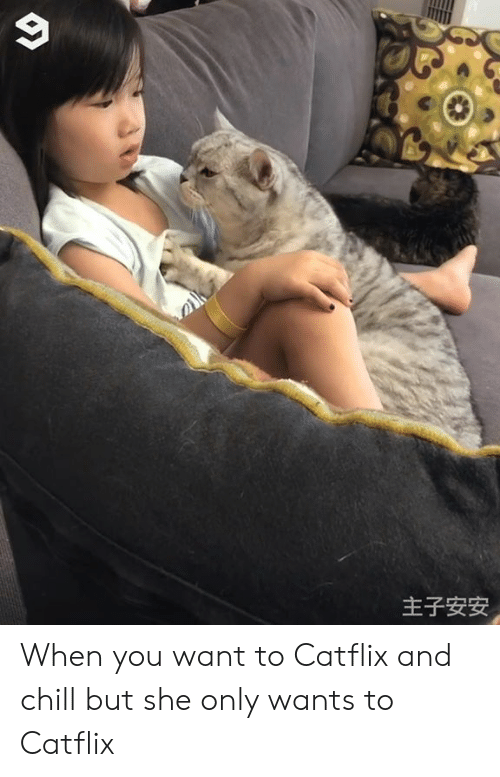 Chill, Dank, and _______ and Chill: 主子安安 When you want to Catflix and chill but she only wants to Catflix
