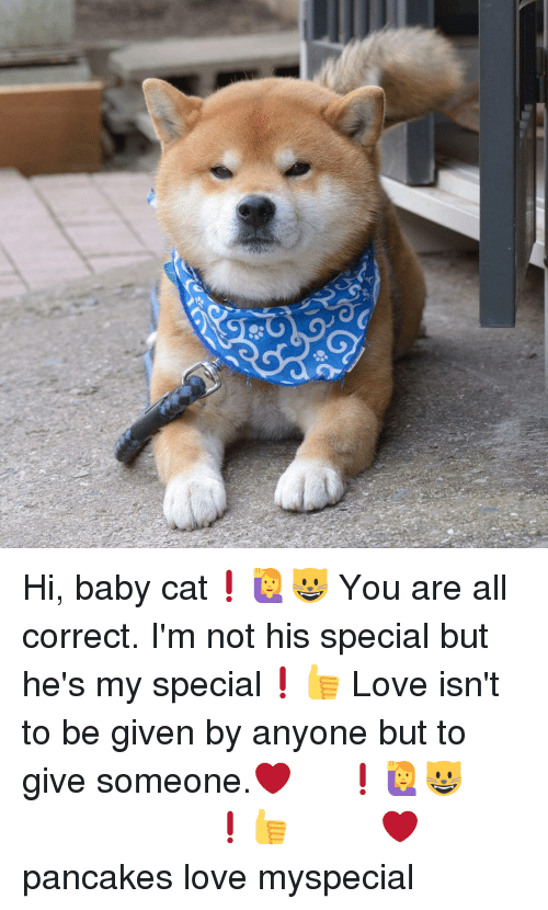Anyoning: 彰  U  AS? Hi, baby cat❗🙋😺 You are all correct. I'm not his special but he's my special❗👍 Love isn't to be given by anyone but to give someone.❤ やあ、子猫ちゃん❗🙋😺 きみは正しいよ ぼくが彼の特別な存在なんじゃなくて彼がぼくにとって特別なんだよ❗👍 愛って誰かからもらうもんじゃなくって、その人に捧げるものだよね❤ 大人の余裕 子猫ちゃんへの忠言 見せつける愛はニセモノの愛 自分が分かってりゃそれでいいんさ 犬の気持ち pancakes love myspecial