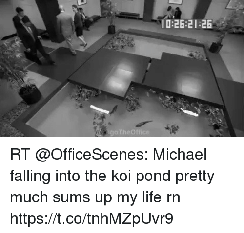 Life, Memes, and Michael: 0:26:21 26 RT @OfficeScenes: Michael falling into the koi pond pretty much sums up my life rn  https://t.co/tnhMZpUvr9