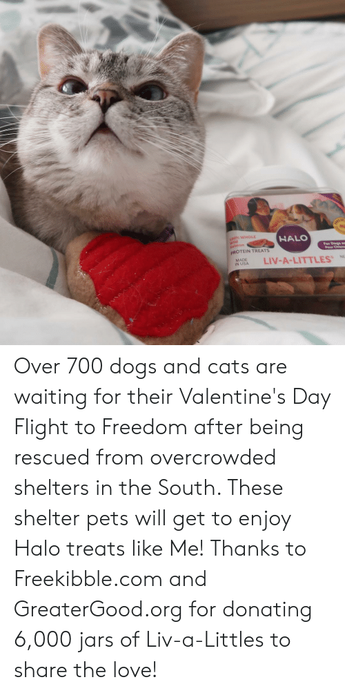 Littles: 00% WHOLE  HALO  id  For Dogs a  Pour Chienm  PROTEIN TREATS  NASA LIV-A-LITTLES  MADE  %NE Over 700 dogs and cats are waiting for their Valentine's Day Flight to Freedom after being rescued from overcrowded shelters in the South. These shelter pets will get to enjoy Halo treats like Me! Thanks to Freekibble.com and GreaterGood.org for donating 6,000 jars of Liv-a-Littles to share the love!
