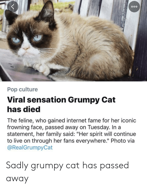 "Family, Internet, and Pop: 00o  Pop culture  Viral sensation Grumpy Cat  has died  The feline, who gained internet fame for her iconic  frowning face, passed away on Tuesday. In a  statement, her family said: ""Her spirit will continue  to live on through her fans everywhere."" Photo via  @RealGrumpyCat Sadly grumpy cat has passed away"