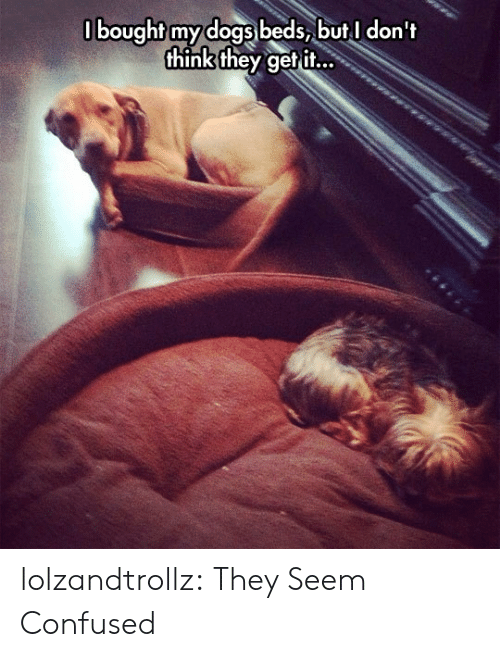 Confused, Dogs, and Tumblr: 0bought my dogs beds, butI don't  think they get it... lolzandtrollz:  They Seem Confused