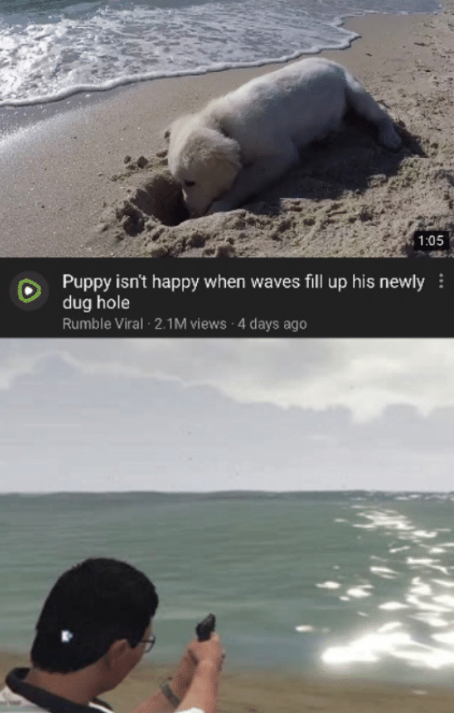 Waves, Happy, and Puppy: 1:05  Puppy isn't happy when waves fill up his newly  dug hole  Rumble Viral 2.1M views 4 days ago