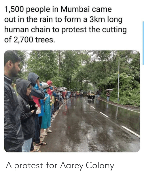 Protest, Rain, and Trees: 1,500 people in Mumbai came  out in the rain to form a 3km long  human chain to protest the cutting  of 2,700 trees. A protest for Aarey Colony