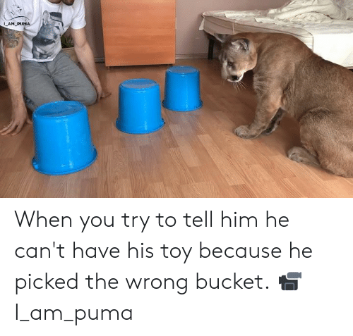 Puma: 1  AM When you try to tell him he can't have his toy because he picked the wrong bucket.  📹 I_am_puma