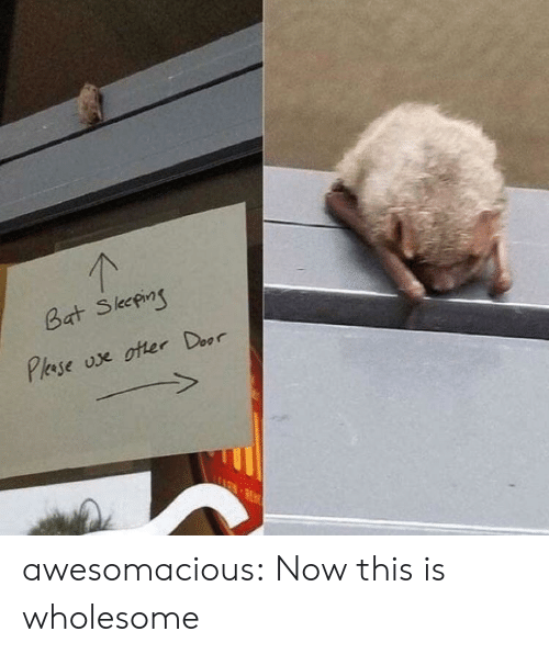 Tumblr, Blog, and Http: 1  Bat Skepi  Pase oe oter Door awesomacious:  Now this is wholesome