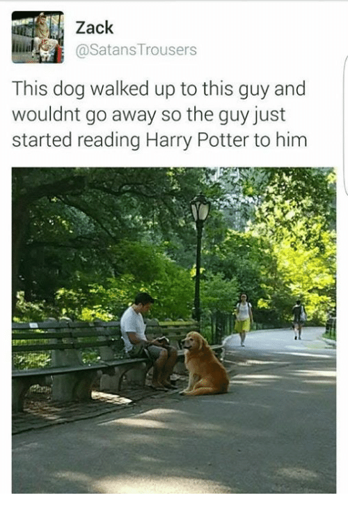 Harry Potter, Potter, and Dog: 11) Zack  @Satans Trousers  This dog walked up to this guy and  wouldnt go away so the guy just  started reading Harry Potter to him