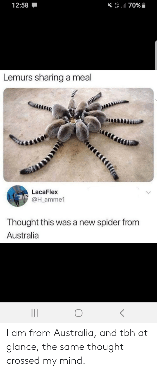 Crossed: 12:58  4670%  Lemurs sharing a meal  LacaFlex  @H_amme1  Thought this was a new spider from  Australia I am from Australia, and tbh at glance, the same thought crossed my mind.
