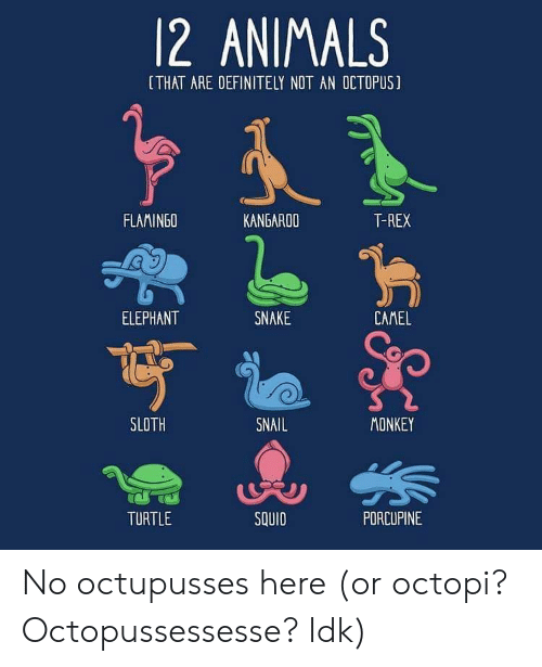 Sloth: 12 ANIMALS  [THAT ARE DEFINITELY NOT AN OCTOPUS]  FLAMINGO  KANGAROO  T-REX  ELEPHANT  SNAKE  CAMEL  SLOTH  SNAIL  MONKEY  TURTLE  SQUID  PDRCUPINE No octupusses here (or octopi? Octopussessesse? Idk)