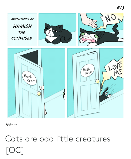 Cats Are:  #13  ADVENTURES OF  NO,  HAMISH  THE  CONFUSED  LOVE  ME  Bath  Room  Bath  Room  Aleiocus Cats are odd little creatures [OC]