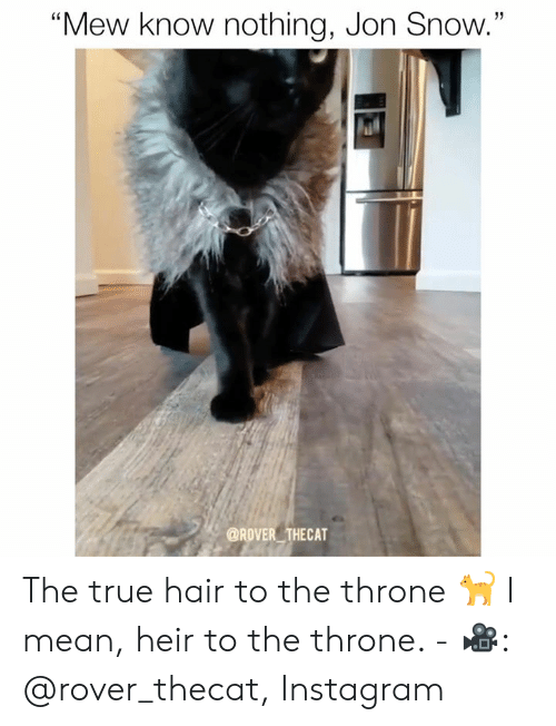 """mew: 13  """"Mew know nothing, Jon Snow.""""  @ROVER THECAT The true hair to the throne 🐈 I mean, heir to the throne.  - 🎥: @rover_thecat, Instagram"""