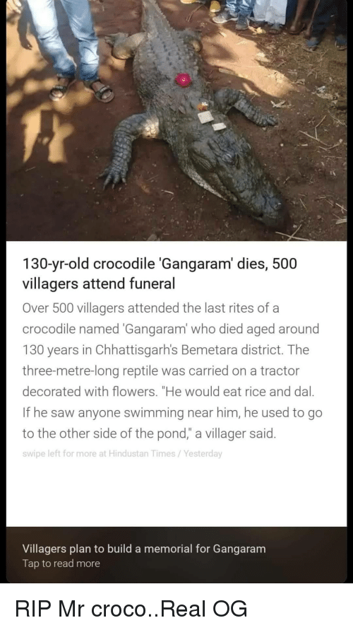 "hindustan: 130-yr-old crocodile 'Gangaram' dies, 500  villagers attend funeral  Over 500 villagers attended the last rites of a  crocodile named Gangaram' who died aged around  130 years in Chhattisgarh's Bemetara district. Thee  three-metre-long reptile was carried on a tractor  decorated with flowers. ""He would eat rice and dal.  If he saw anyone swimming near him, he used to go  to the other side of the pond,"" a villager said.  swipe left for more at Hindustan Times/Yesterday  Villagers plan to build a memorial for Gangaram  Tap to read more RIP Mr croco..Real OG"