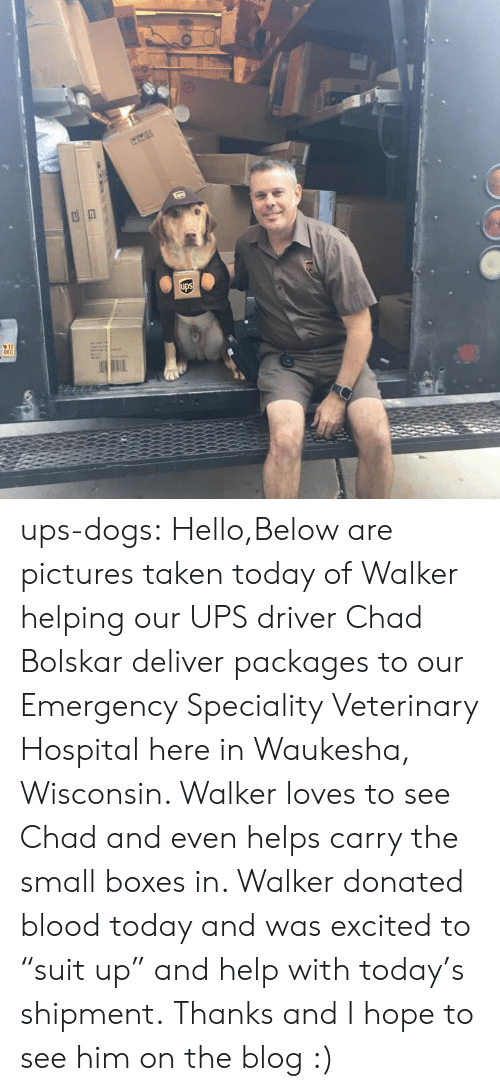 """Dogs, Hello, and Taken: 17  DEC ups-dogs: Hello,Below are pictures taken today of Walker helping our UPS driver Chad Bolskar deliver packages to our Emergency  Speciality Veterinary Hospital here in Waukesha, Wisconsin. Walker loves to see Chad and even helps carry the small boxes in. Walker donated blood today and was excited to """"suit up"""" and help with today's shipment. Thanks and I hope to see him on the blog :)"""