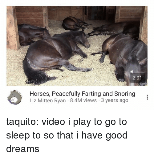 Go to Sleep, Horses, and Tumblr: 2:01  Horses, Peacefully Farting and Snoring,  Liz Mitten Ryan 8.4M views 3 years ago taquito: video i play to go to sleep to so that i have good dreams