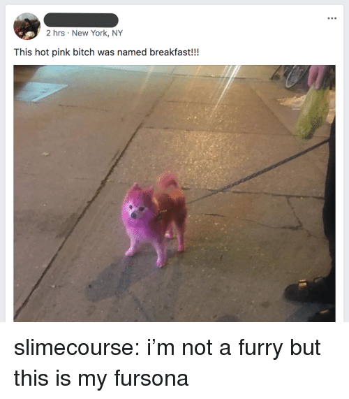 Bitch, New York, and Target: 2 hrs New York, NY  This hot pink bitch was named breakfast!!! slimecourse:  i'm not a furry but this is my fursona