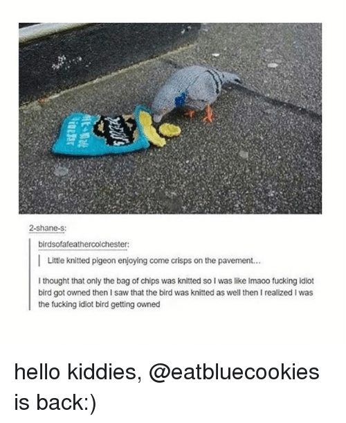 Getting Owned: 2-shane-s:  birdsofafeathercolchester:  I Little knitted pigeon enjoying come crisps on the pavement...  thought that only the bag of chips was knitted so lwas like Imaoo fucking idiot  bird got owned then saw that the bird was knitted as well then I realized I was  the fucking idiot bird getting owned hello kiddies, @eatbluecookies is back:)