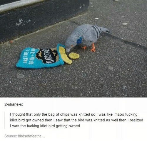 Getting Owned: 2-shane-s  I thought that only the bag of chips was knitted so I was like Imaoo fucking  idiot bird got owned then I saw that the bird was knitted as well then I realized  I was the fucking idiot bird getting owned  Source: birdsofafeathe