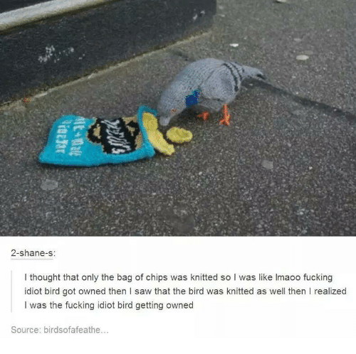 Getting Owned: 2-shane-s  I thought that only the bag of chips was knitted so I was like lmaoo fucking  idiot bird got owned then l saw that the bird was knitted as well then I realized  I was the fucking idiot bird getting owned  Source: birdsofafeathe...