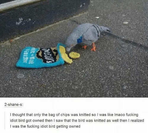 Getting Owned: 2-shane-s:  I thought that only the bag of chips was knitted so I was like Imaoo fucking  idiot bird got owned then I saw that the bird was knitted as well then I realized  I was the fucking idiot bird getting owned