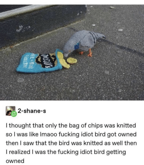 the bird: 2-shane-s  I thought that only the bag of chips was knitted  so I was like Imaoo fucking idiot bird got owned  then I saw that the bird was knitted as well then  I realized I was the fucking idiot bird getting  owned  pecal's