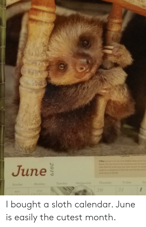Friday, Calendar, and Sloth: 20  CE  Totfee  Rch  June  Sa  Friday  Thursday  Wednesday  Tuesday  Monday  Sunday  31  30  JULY  MAY  2019 I bought a sloth calendar. June is easily the cutest month.