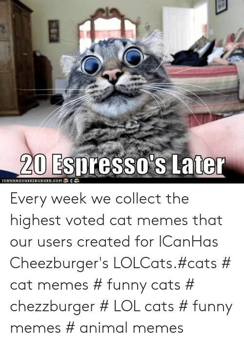 cheezburger: 20 Espresso's Later  IGAN HAS CHEEZBURGER,00M Every week we collect the highest voted cat memes that our users created for ICanHas Cheezburger's LOLCats.#cats # cat memes # funny cats # chezzburger # LOL cats # funny memes # animal memes