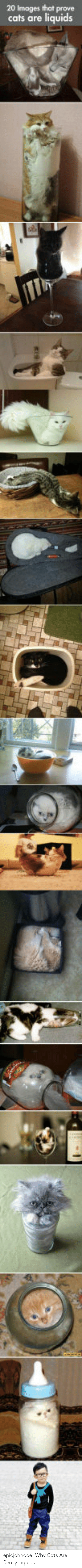 Cats Are: 20 Images that prove  cats are liquids epicjohndoe:  Why Cats Are Really Liquids