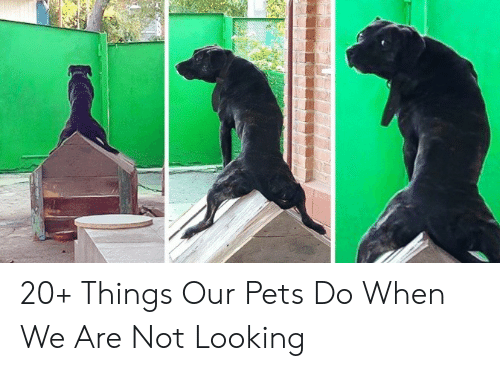 Pets, Looking, and  Things: 20+ Things Our Pets Do When We Are Not Looking