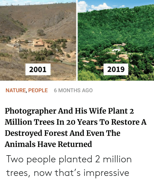 destroyed: 2001  2019  NATURE, PEOPLE  6 MONTHS AGO  Photographer And His Wife Plant 2  Million Trees In 20 Years To Restore A  Destroyed Forest And Even The  Animals Have Returned Two people planted 2 million trees, now that's impressive