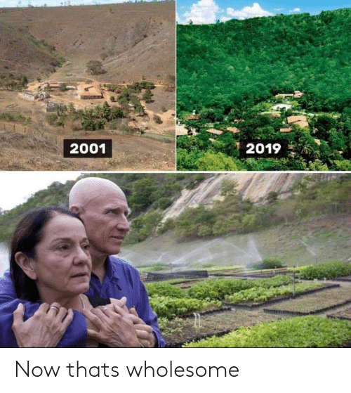 Wholesome, Now, and That: 2001  2019 Now thats wholesome