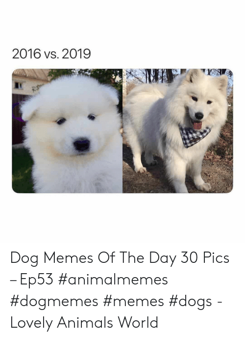 Memes Dogs: 2016 vs. 2019 Dog Memes Of The Day 30 Pics – Ep53 #animalmemes #dogmemes #memes #dogs - Lovely Animals World