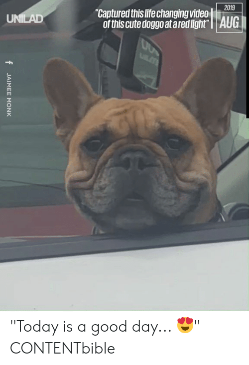 """Cute, Dank, and Life: 2019  """"Captured this life changing video  of this cute doggo at ared light""""   AUG  UNILAD  LT  fJAIMEE MONK """"Today is a good day... 😍""""  CONTENTbible"""