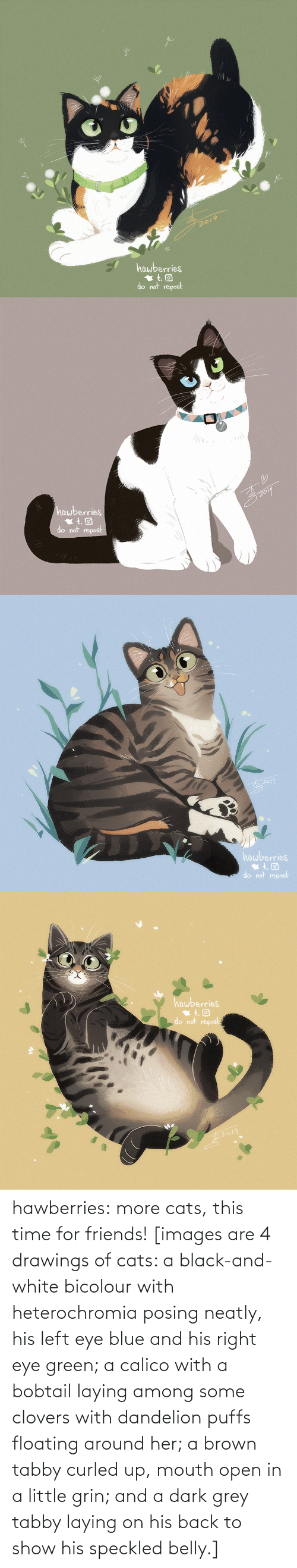 open: 2019  hawberries  do not repost   hawberries  do not repost   hawberries  do not repost   hawberries  do not repost hawberries: more cats, this time for friends! [images are 4 drawings of cats: a black-and-white bicolour with heterochromia posing neatly, his left eye blue and his right eye green; a calico with a bobtail laying among some clovers with dandelion puffs floating around her; a brown tabby curled up, mouth open in a little grin; and a dark grey tabby laying on his back to show his speckled belly.]