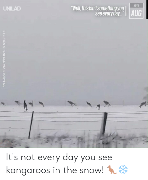 """Dank, Stephen, and Snow: 2019  """"Well, this isn't something you AUG  UNILAD  see every day...  STEPHEN GRENFELL VIA STORYFUL It's not every day you see kangaroos in the snow! 🦘❄"""