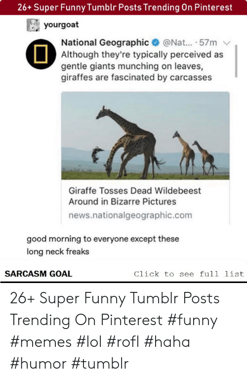 typically: 26+ Super Funny Tumblr Posts Trending On Pinterest  yourgoat  National Geographic@Nat... .57m  Although they're typically perceived as  gentle giants munching on leaves,  giraffes are fascinated by carcasses  Giraffe Tosses Dead Wildebeest  Around in Bizarre Pictures  news.nationalgeographic.com  good morning to everyone except these  long neck freaks  SARCASM GOAL  Click to see full list 26+ Super Funny Tumblr Posts Trending On Pinterest #funny #memes #lol #rofl #haha #humor #tumblr