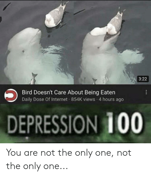 Internet, Depression, and Dank Memes: 3:22  Bird Doesn't Care About Being Eaten  Daily Dose Of Internet 854K views 4 hours ago  DEPRESSION 100 You are not the only one, not the only one...
